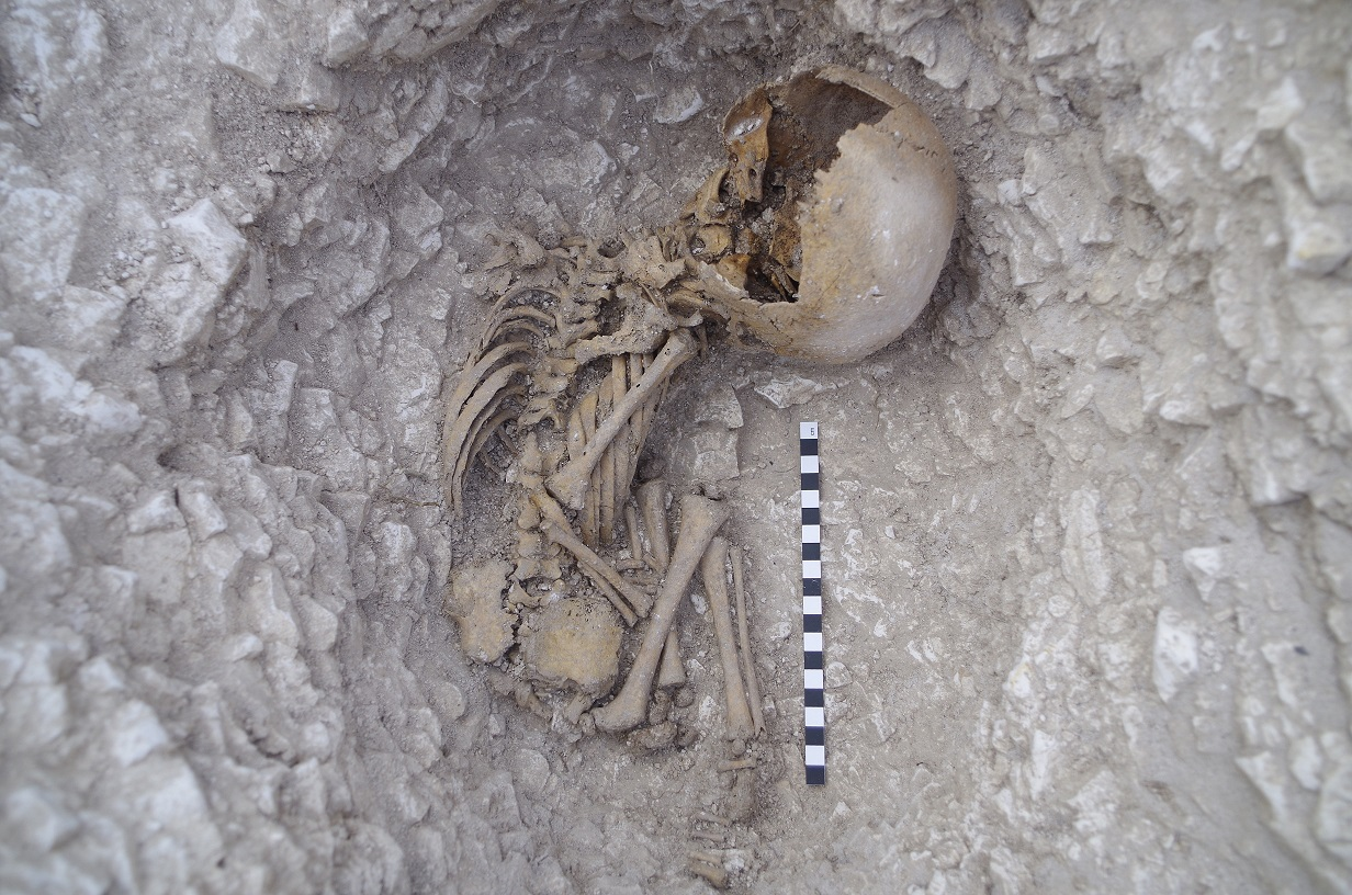 Infant skeleton